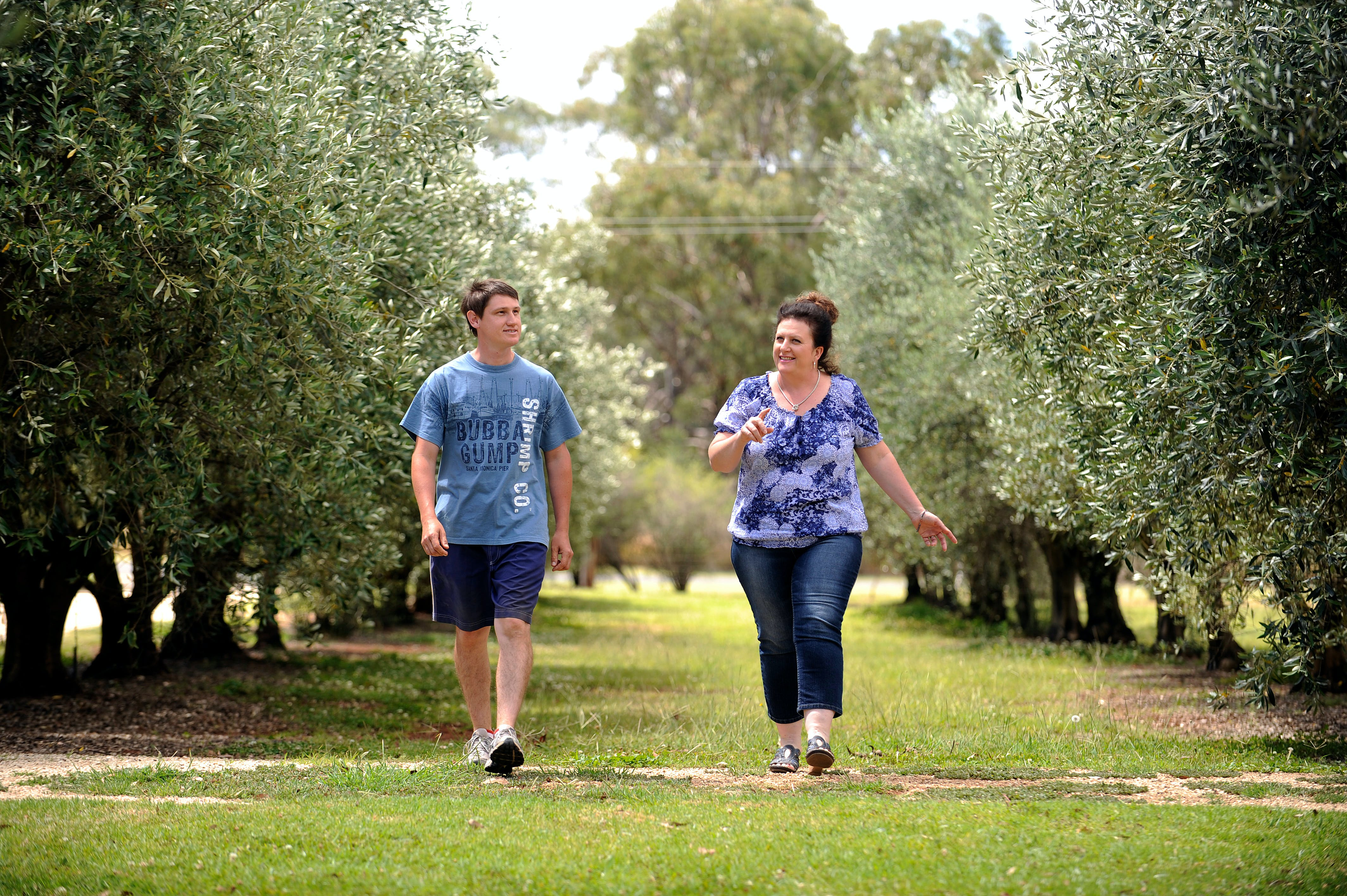 Olives of Beaulieu - Tourism TAS