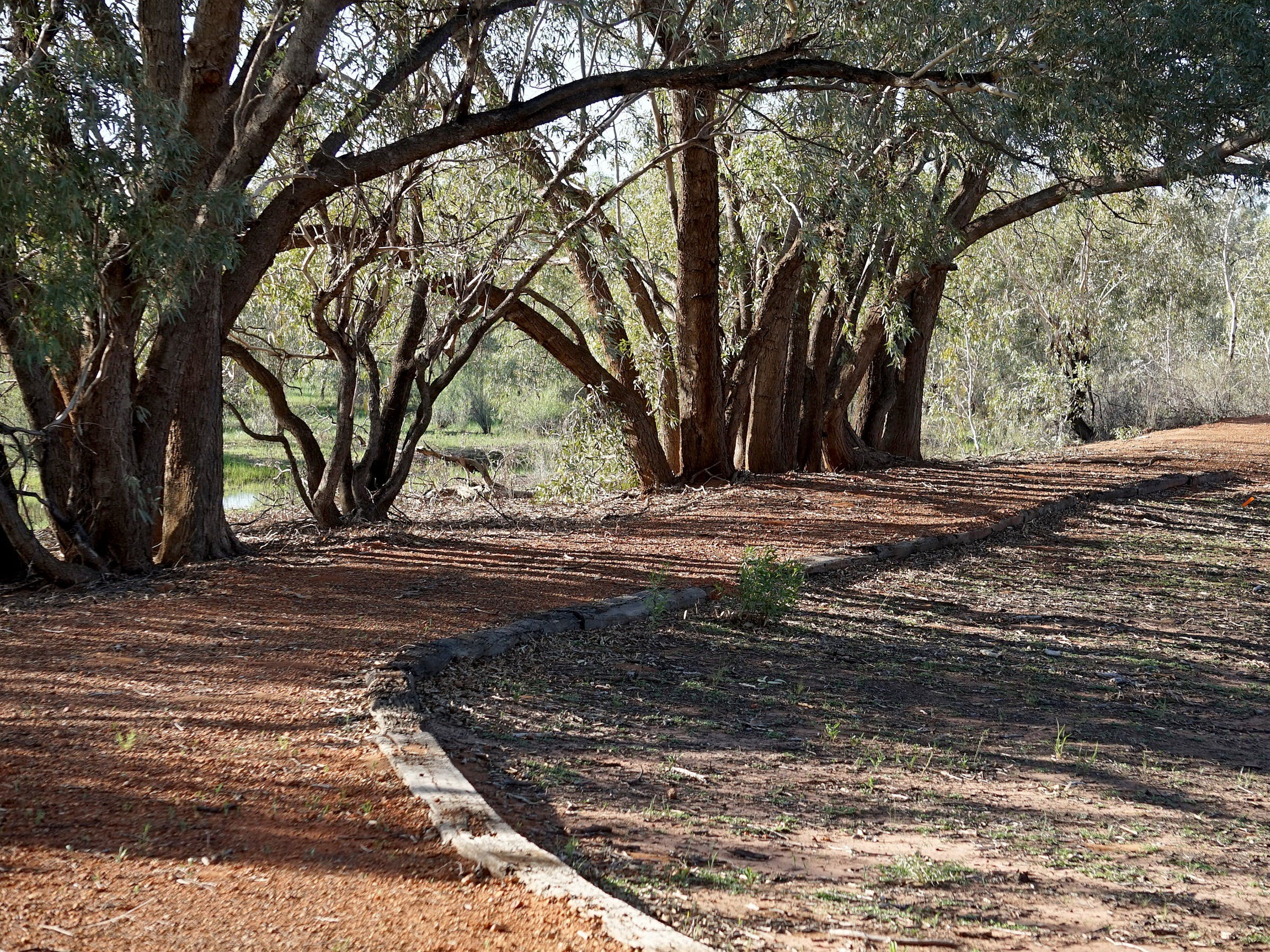 Warrego Floodplain walking track - Tourism TAS