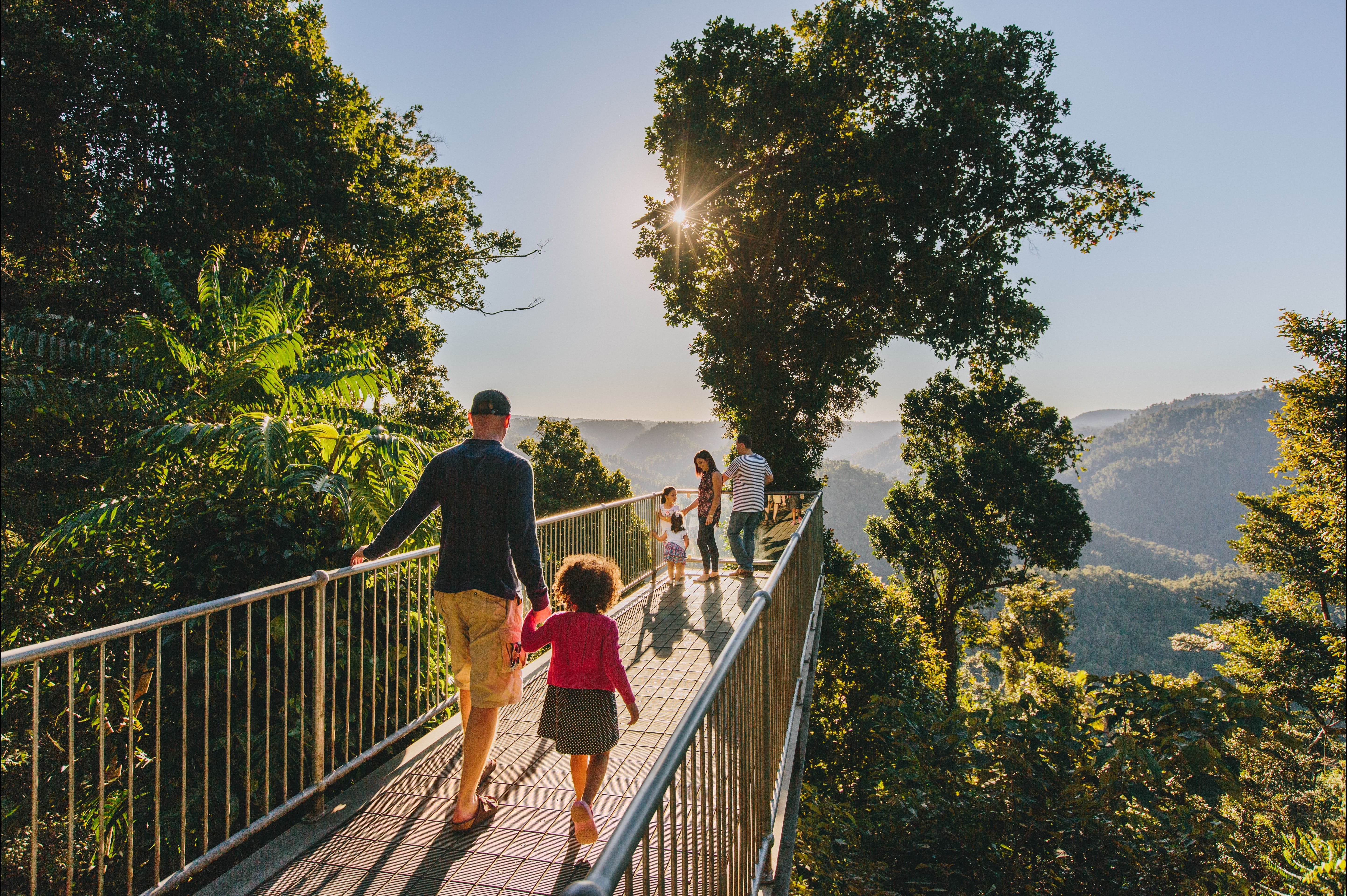 Mamu Tropical Skywalk - Tourism TAS