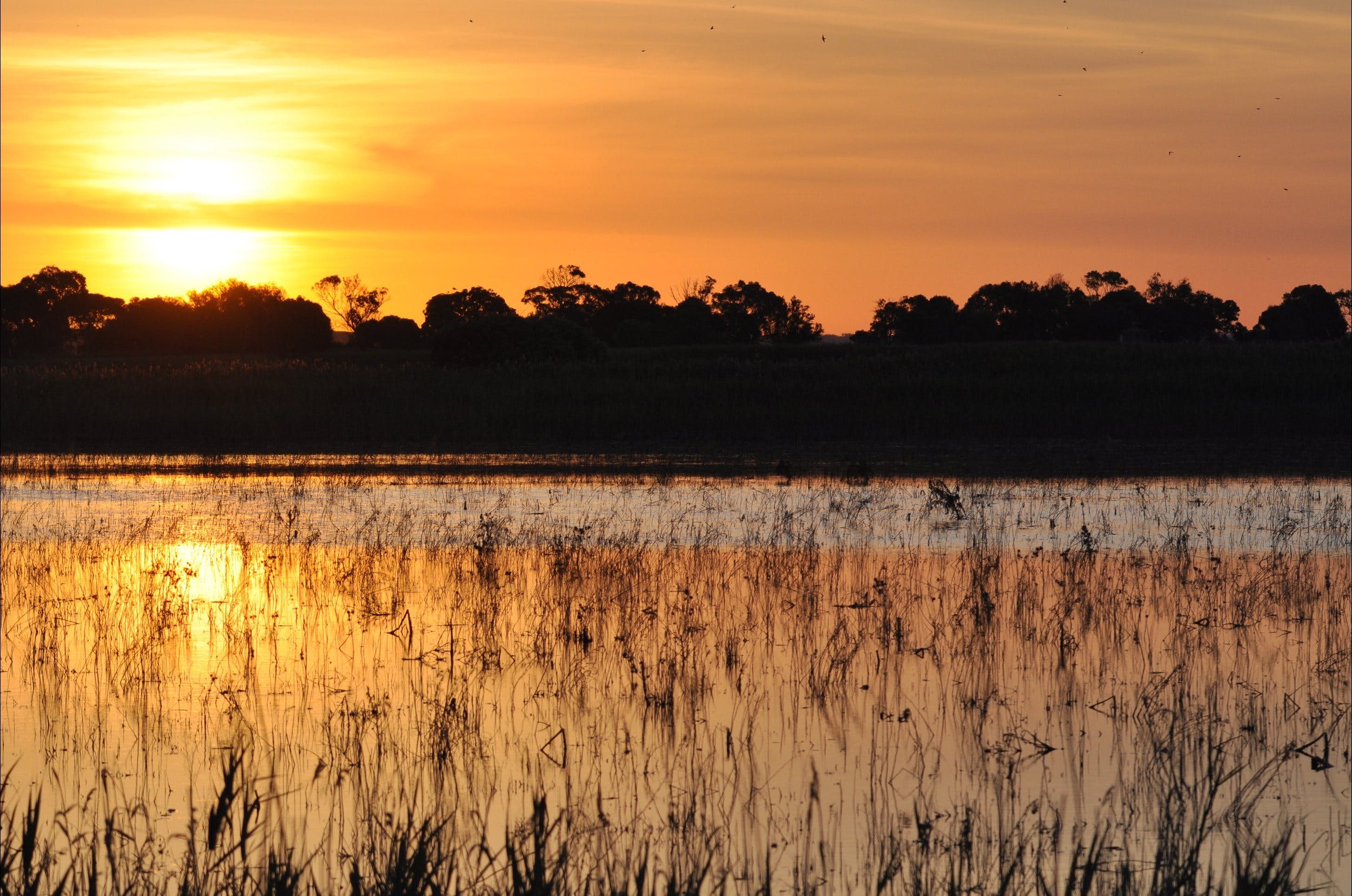 Bool Lagoon Game Reserve and Hacks Lagoon Conservation Park - Tourism TAS