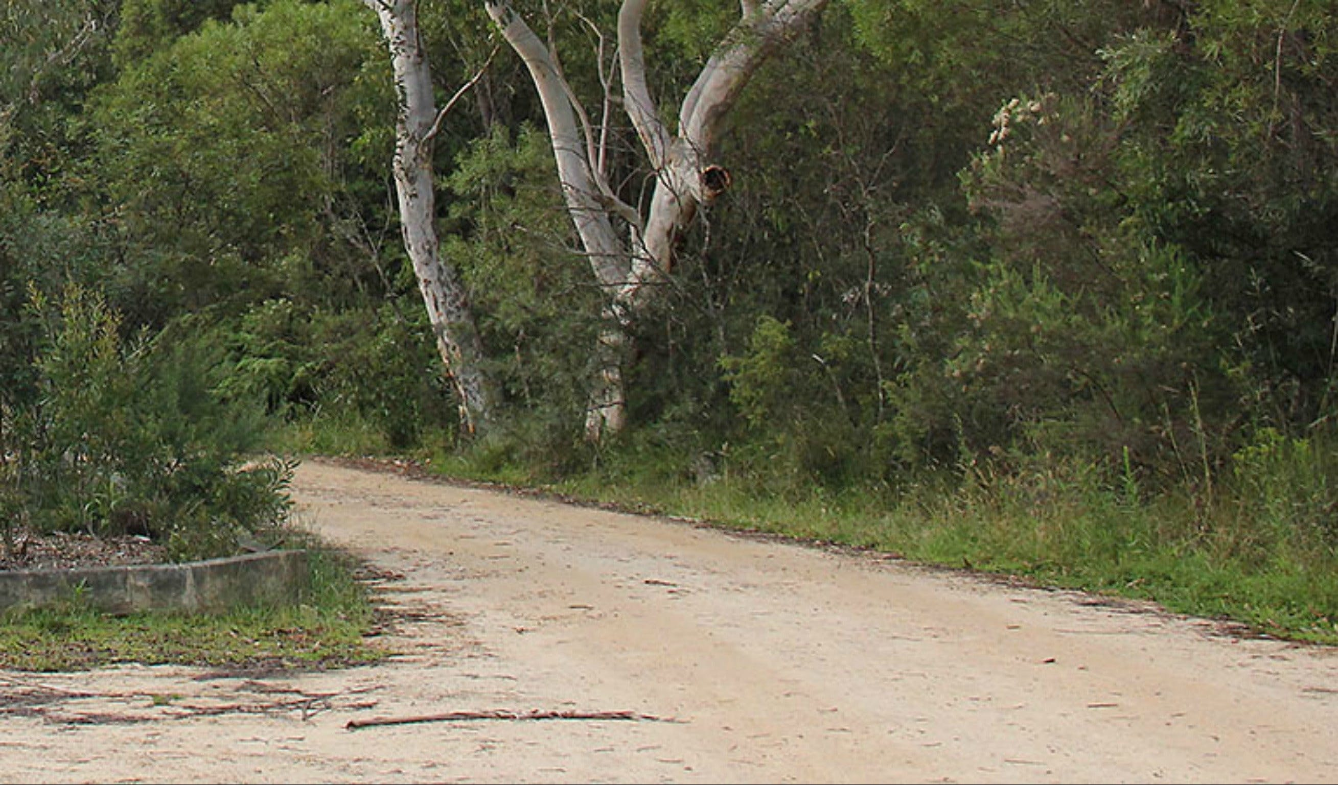 Riverview walking track - Tourism TAS