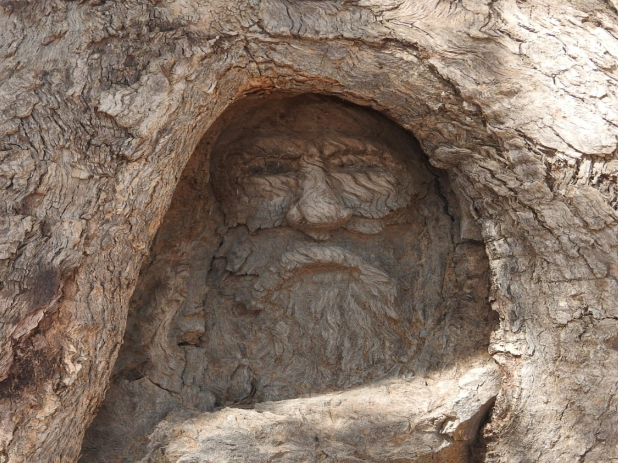 The Face Tree near Burke and Wills Dig Tree - Tourism TAS