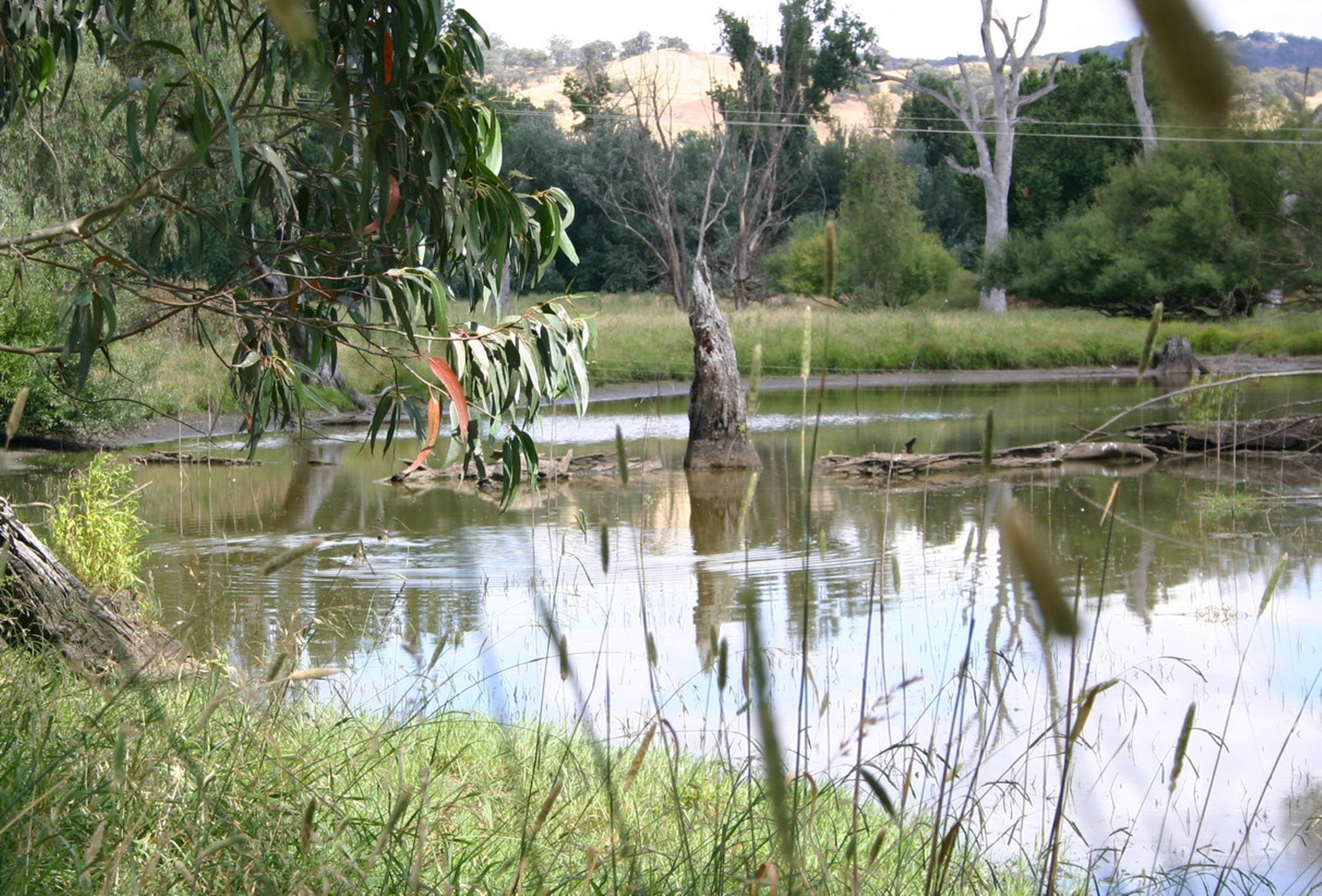 Tumut Wetlands - Tourism TAS