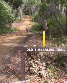 Old Timberline and Sidings Rail Trails - Tourism TAS