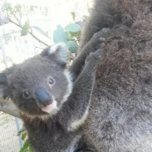 West Oz Wildlife Petting Zoos - Tourism TAS