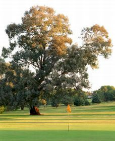 Cowra Golf Club - Tourism TAS
