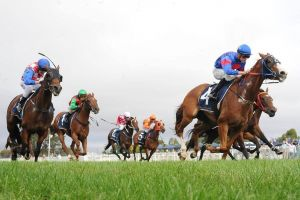 Christmas Cup Race Day - Tourism TAS