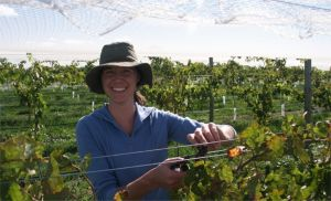 Kingsdale Wines - Cellar Door Wine Tastings - Tourism TAS