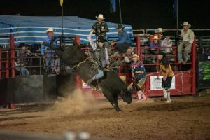 Black Opal Bull and Bronc Ride - Tourism TAS