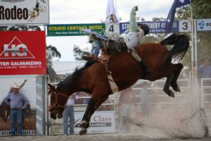 Stroud Rodeo and Campdraft - Tourism TAS